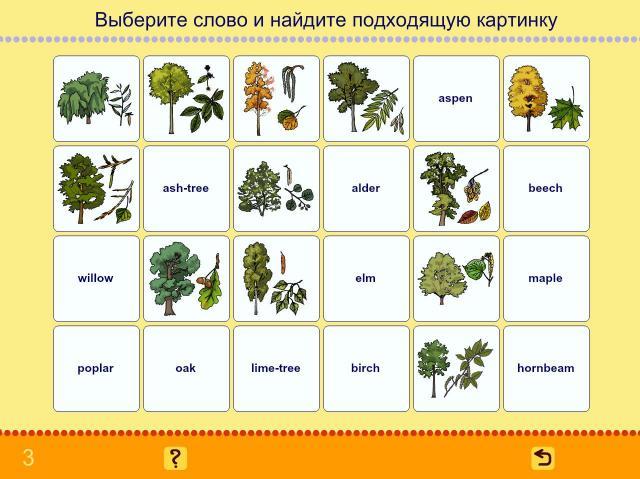 Учим английские слова. Деревья_1
