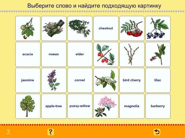 Учим английские слова. Деревья_2