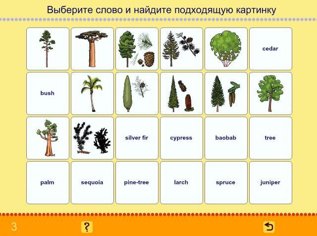 Учим английские слова. Деревья_3