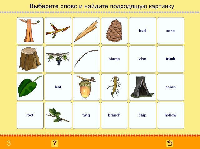 Учим английские слова. Деревья_4