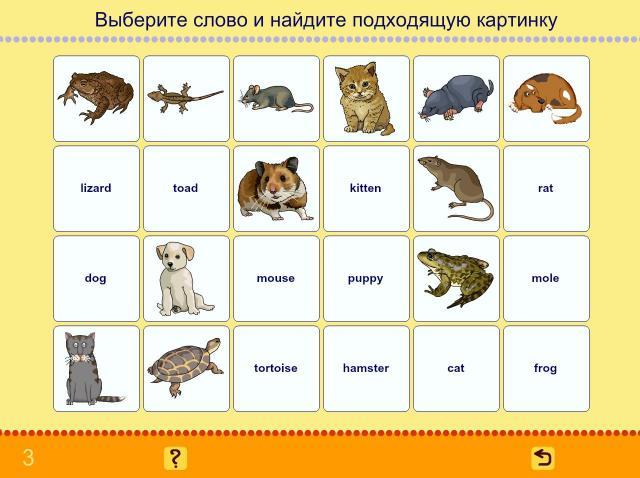 Учим английские слова. Животные_4