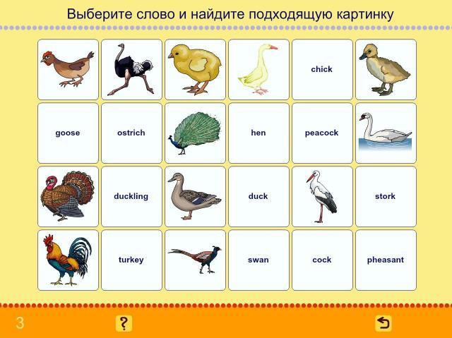 Учим английские слова. Птицы_1