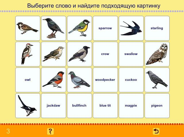 Учим английские слова. Птицы_2