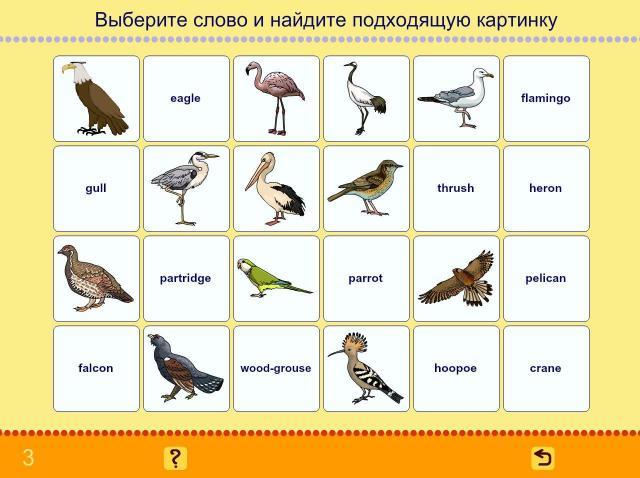 Учим английские слова. Птицы_3