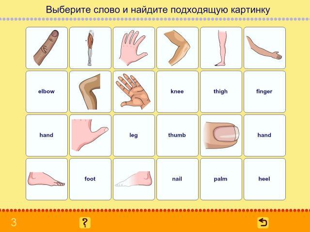 Учим английские слова. Тело человека_4