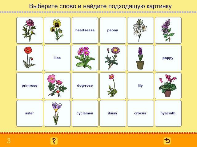 Учим английские слова. Цветы_2