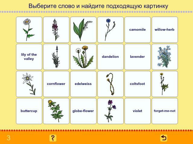 Учим английские слова. Цветы_3