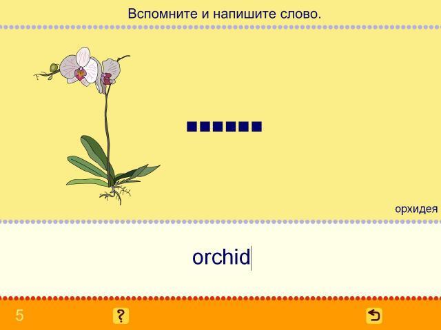 Учим английские слова. Цветы_5